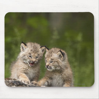 Two Canada Lynx Kittens Playing On A Log Mouse Mat
