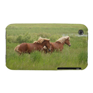 Two Cantering Palomino Horses in a Field Photo iPhone 3 Cover