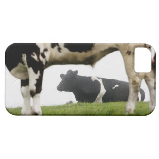 two case for the iPhone 5