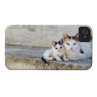 Two cats on stone steps iPhone 4 covers