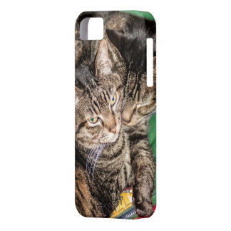 Two Cats Snuggling iPhone 5 Case