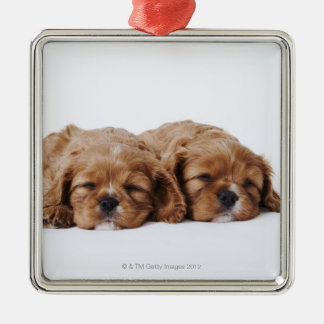 Two Cavalier King Charles Spaniel puppies Christmas Ornament