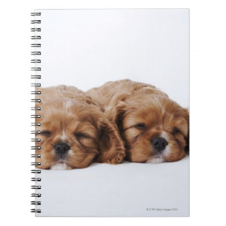Two Cavalier King Charles Spaniel puppies Spiral Notebook