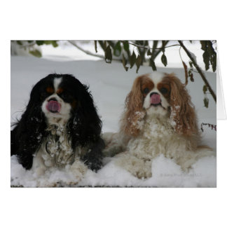 Two Cavaliers in the Snow 08-01a Greeting Card