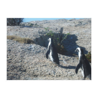 Two Cheeky Fellas at Boulder Bay Cape Town! Canvas Print