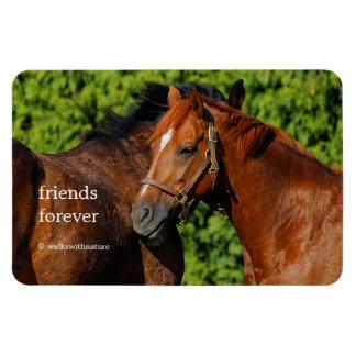 Two Chestnut Horses: Lean on Me Rectangular Photo Magnet