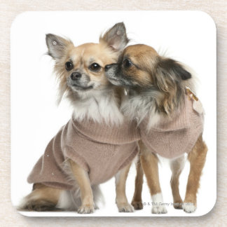 Two Chihuahuas dressed (2 years old) Coaster