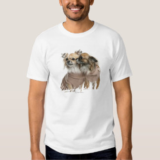 Two Chihuahuas dressed (2 years old) Tees