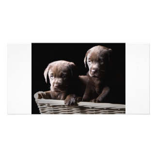 Two Chocolate Labrador Puppies Personalized Photo Card
