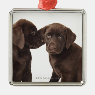 Two chocolate Labrador Retriever Puppies Christmas Ornament