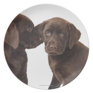 Two chocolate Labrador Retriever Puppies Dinner Plate