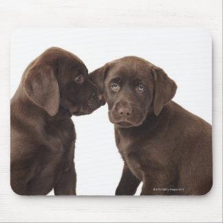 Two chocolate Labrador Retriever Puppies Mouse Pad
