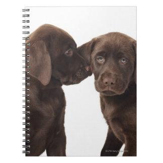 Two chocolate Labrador Retriever Puppies Note Books