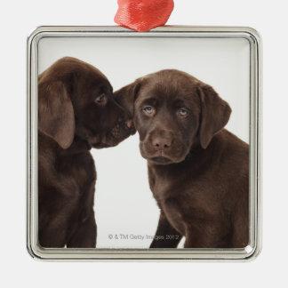 Two chocolate Labrador Retriever Puppies Silver-Colored Square Decoration