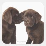 Two chocolate Labrador Retriever Puppies Square Sticker