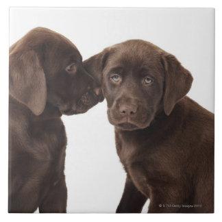 Two chocolate Labrador Retriever Puppies Tile
