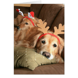 Two Christmas Holiday Golden Retrievers Card