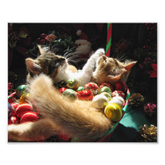 Two Christmas Kitty Cats Kittens Together Basket Photograph