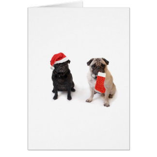 Two christmas pugs card