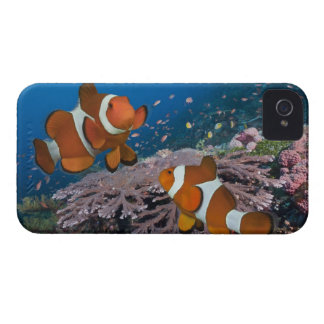 Two Clownfish iPhone 4 Cover