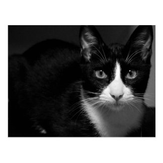 Two-color pencil Cat Fat Called Photography byw Postcard