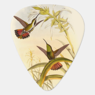 Two Colorful Hummingbirds Aiming for Same Flower Guitar Pick