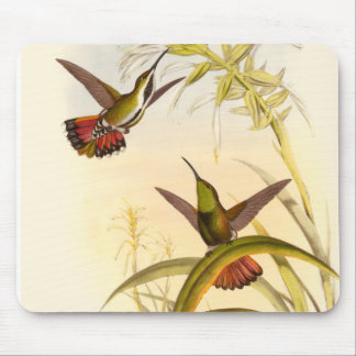 Two Colorful Hummingbirds Aiming for Same Flower Mousepad