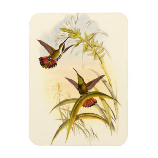 Two Colorful Hummingbirds Aiming for Same Flower Rectangular Magnets