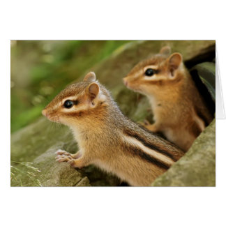 Two Cute Baby Chipmunks Greeting Card