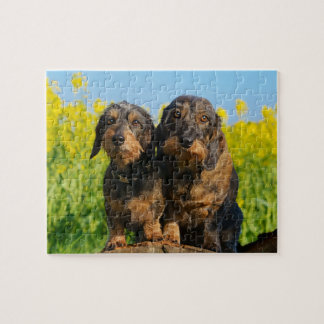 Two Cute Dachshund Dogs Dackel Photo - Game 8x10 Puzzle