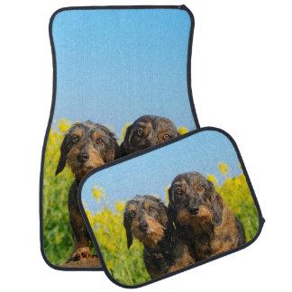 Two Cute Dachshund Dogs Dackel Portrait Photo - Car Mat