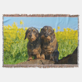 Two Cute Dachshund Dogs Dackel Portrait Photo soft Throw Blanket