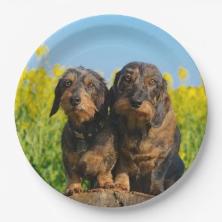 Two Cute Dachshunds Dogs Dackel Friends Pet Photo Paper Plate