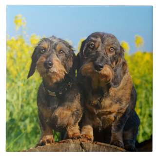 Two Cute Dachshunds Dogs Dackel Friends Pet Photo Tile