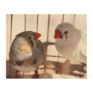 Two Cute Finch Birds behind Bars Wood Prints