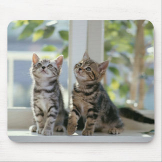 Two Cute Kittens Mouse Pads