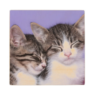 Two Cute Kittens Napping Maple Wood Coaster