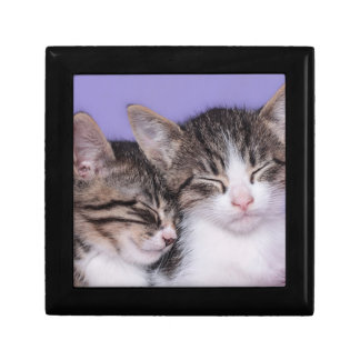 Two Cute Kittens Napping Small Square Gift Box