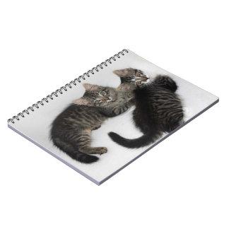 Two Cute Kittens Notebook