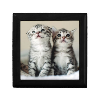 Two Cute Kittens On Bed Gift Box