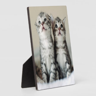 Two Cute Kittens On Bed Plaque