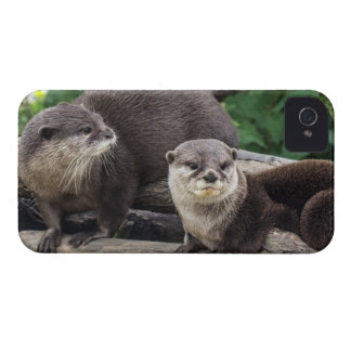 Two Cute Otters   Otter iPhone 4 Case-Mate Cases