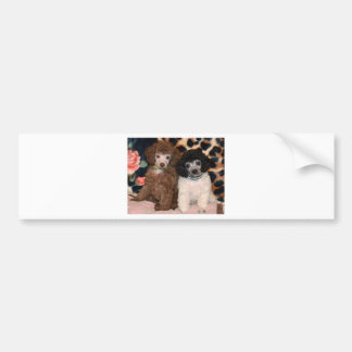 Two Cute Poodle Toy Poodle Puppies Bumper Sticker