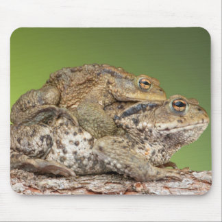 Two Cute Toads Mouse Pads