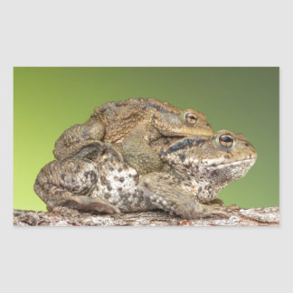 Two Cute Toads Rectangle Sticker
