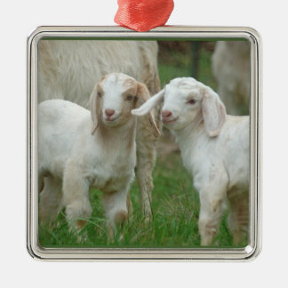 Two Cute White Baby Goats Silver-Colored Square Decoration