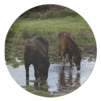 Two Dartmoor Ponies Drinking At Watering Hole Plate