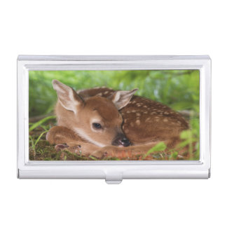 Two day old White-tailed Deer baby, Kentucky. Business Card Holder