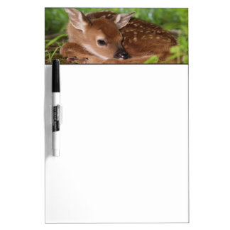 Two day old White-tailed Deer baby, Kentucky. Dry Erase Board