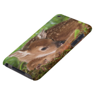 Two day old White-tailed Deer baby, Kentucky. iPod Touch Case-Mate Case